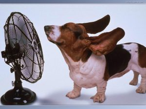 fan and dog
