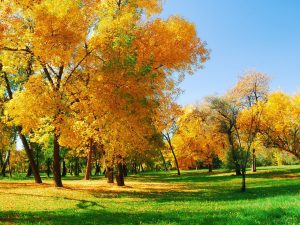 autumn_trees_leaves__grass_2560x1920